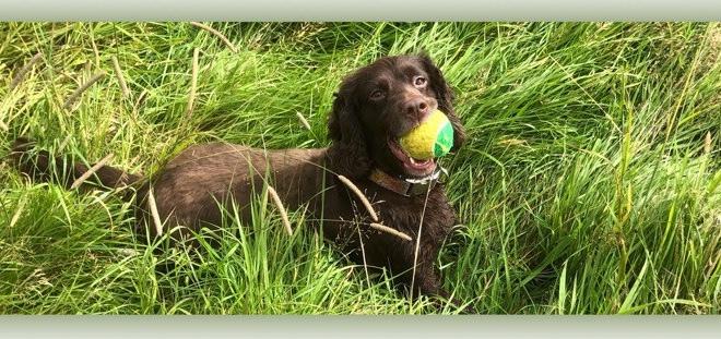 Meg with tennis ball