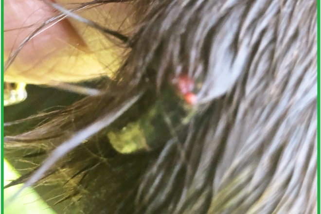 Clever K9s Dog Walking Damaged dew claw