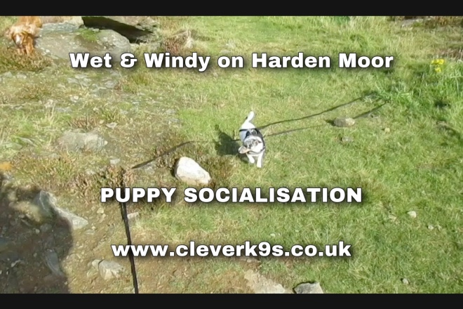 Clever K9s Puppy socialisation & walk training