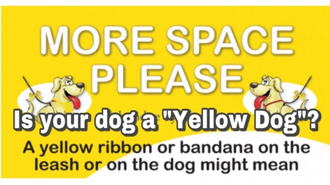 Clever K9s Keighley Yellow dog banner